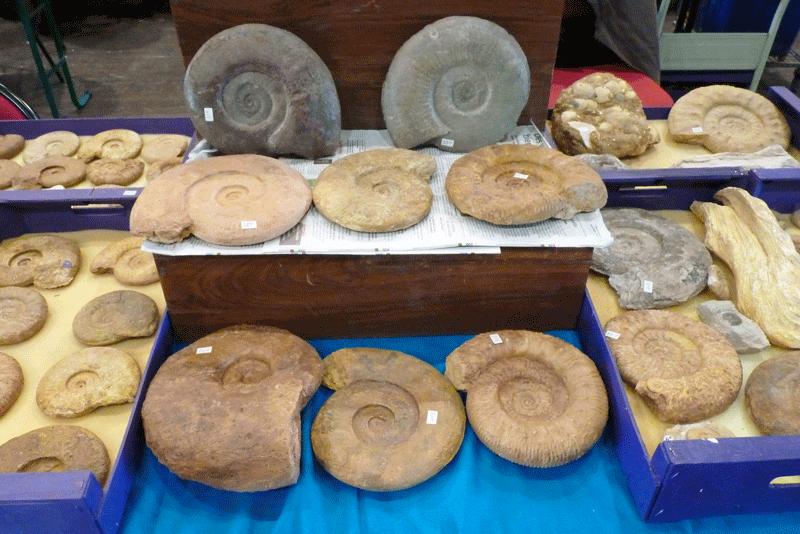 Bourse de St Benoit 2016 - les fossiles de Gérard